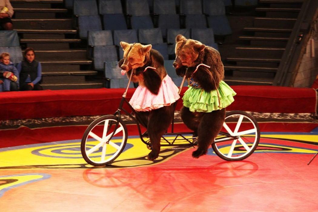 Фото с изображением цирка