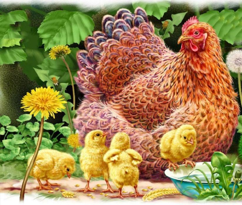 Для открыток, картинка курица с цыплятами