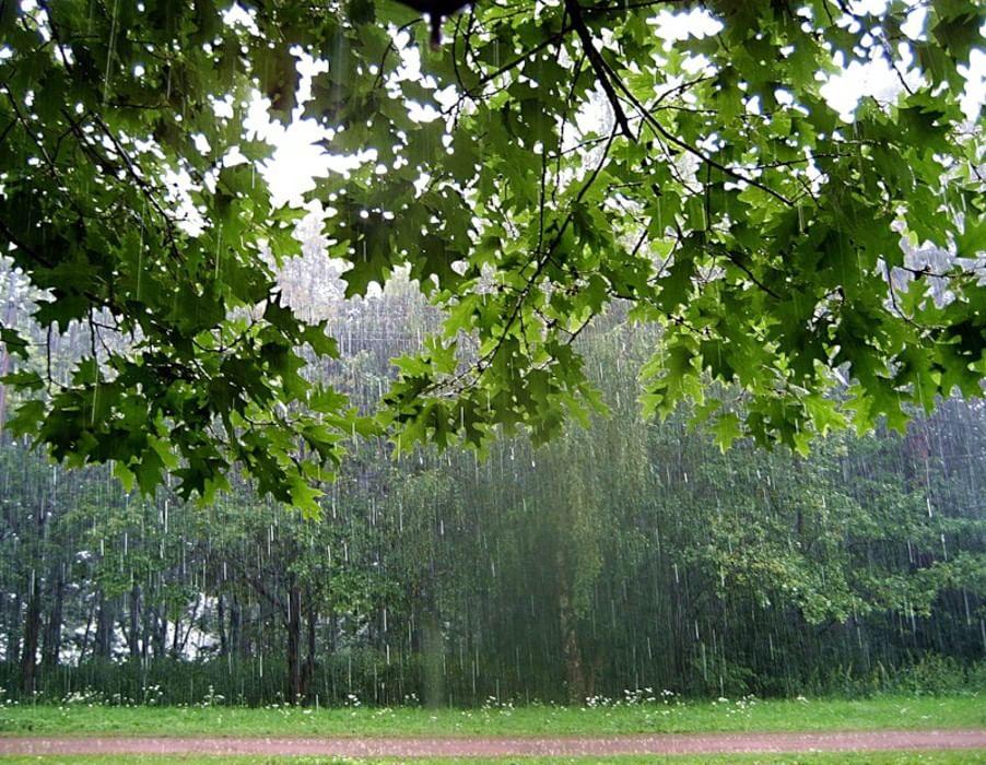 Картинки осеннего леса высокое разрешение этой