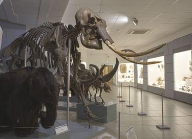Постоянная экспозиция Музея природы