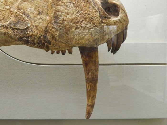 Выставка «Зубы ящеров Земли»