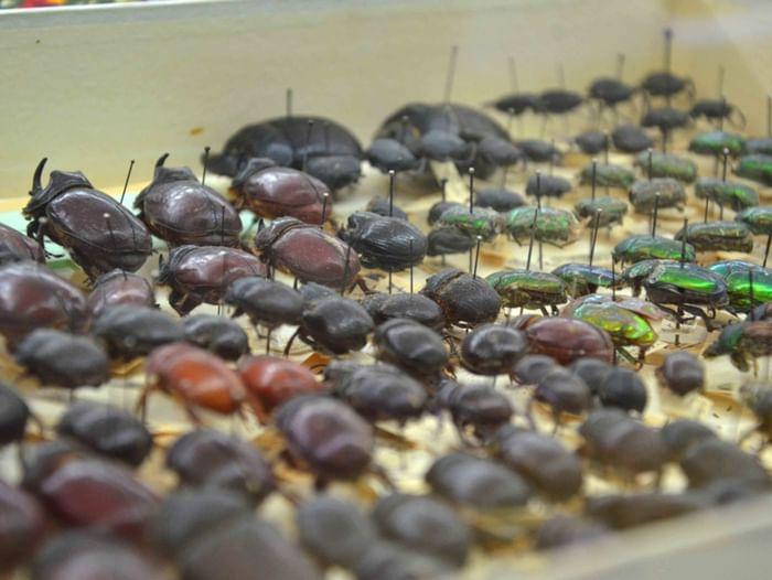 Выставка коллекции насекомых из фонда музея-заповедника