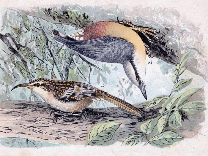 Выставка «Хранитель Лебедии»