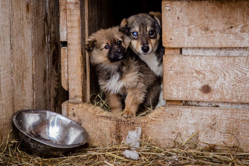 сути картинки с бездомными животными для сайта шоке