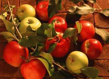 Яблочный Спас в усадьбе А. А. Фета