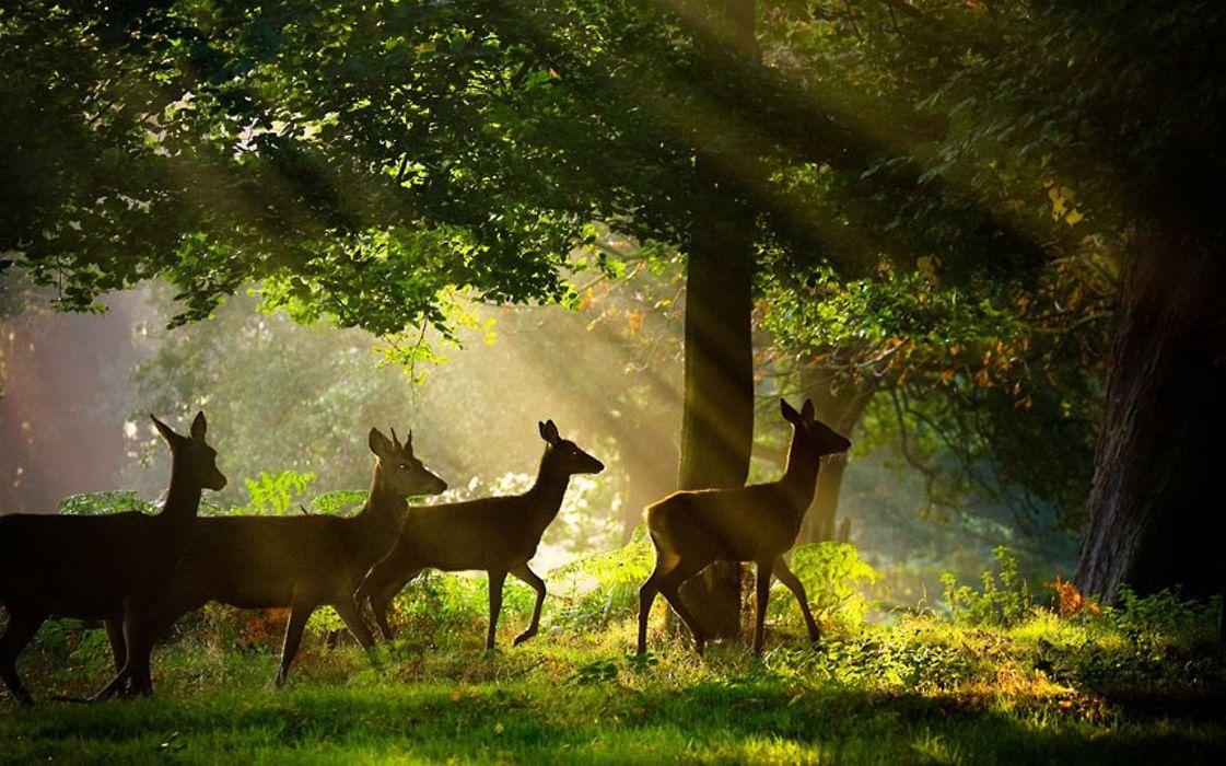 Картинки природы и животных в лесу
