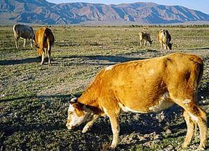 Скотоводческие заговоры сут-хольских тувинцев