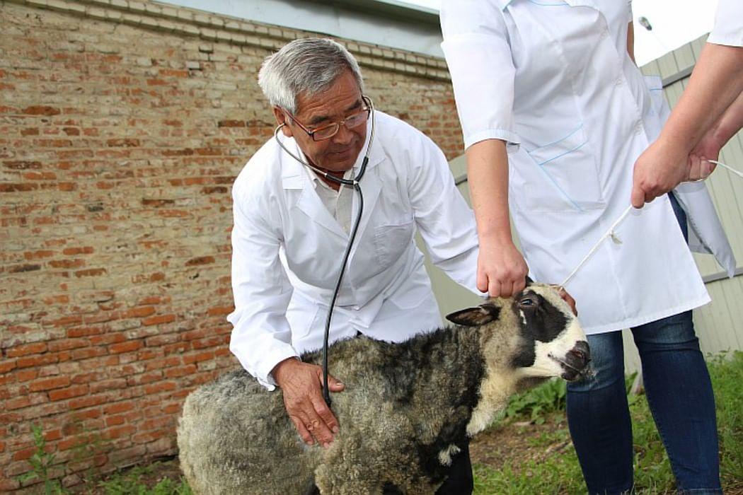 стоматология день ветеринарного работника россии охлажденное мясо порезать