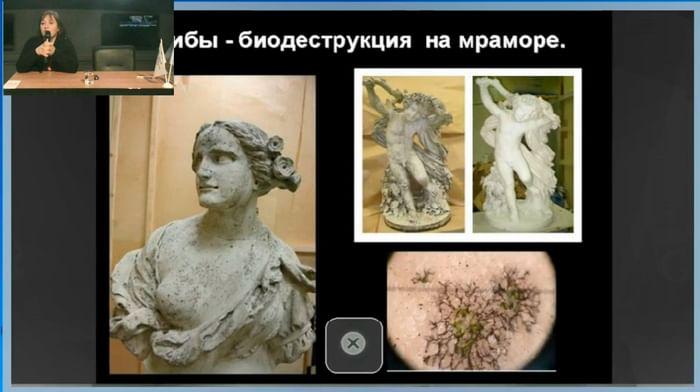 Методы биологического контроля, исследований и анализа в музейной работе