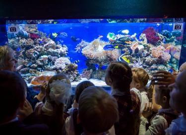 Экспозиция «Мир океана. Прикосновение»
