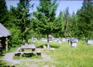 Пчеловодческие обряды и бортничьи песни южных удмуртов