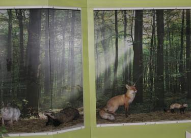 Выставка «Животный и растительный мир Поволжья»