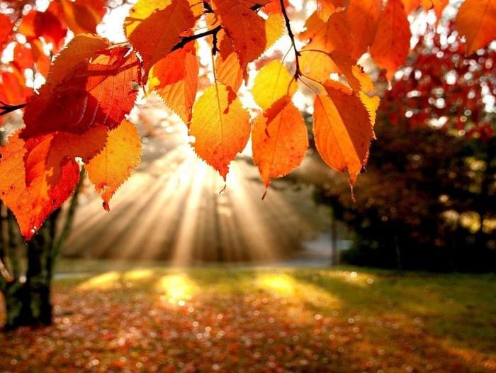 Выставка «О природе поэтической строкой. Осень»