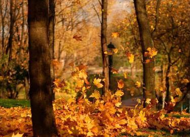 Конкурс стихов «Осенний листопад»