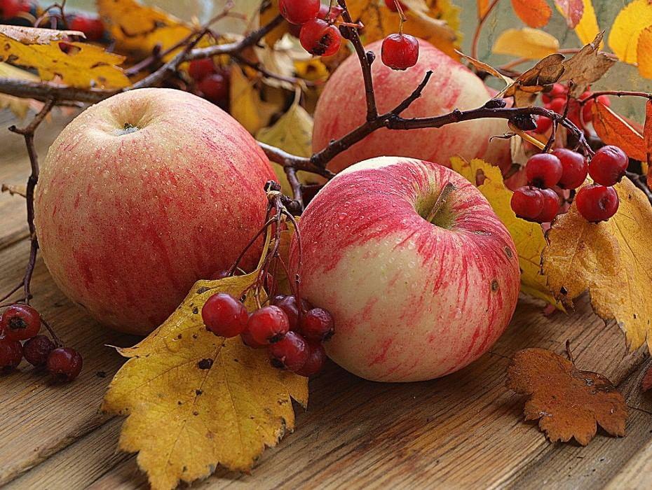 она красивые осенние картинки с яблоками создаются