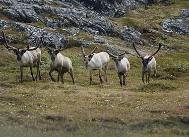 Выставка «Арктика – природа, история освоения, перспективы развития»