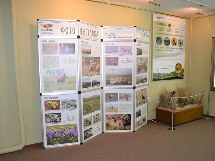 Выставка «Экологические этюды»