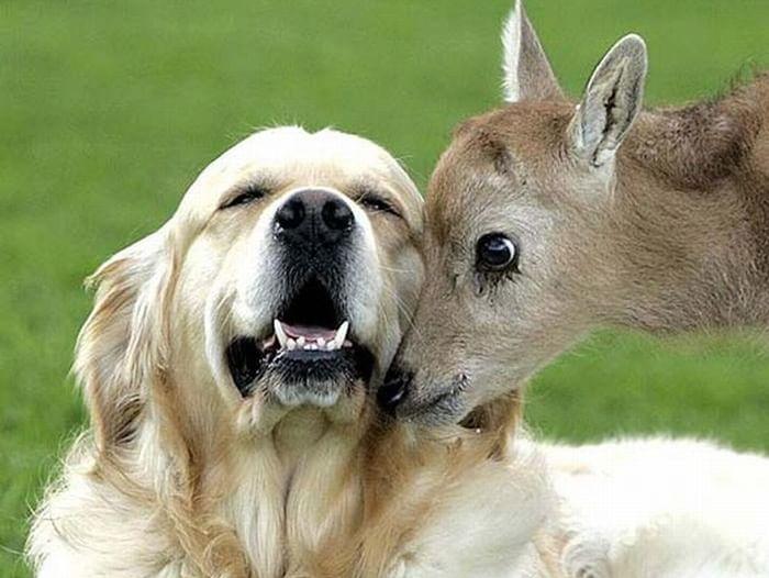 Экологический час «Эти забавные животные»