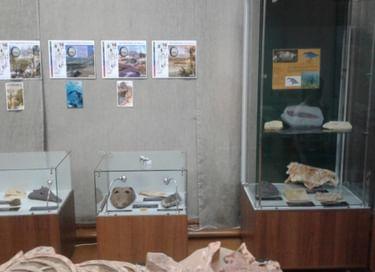 Выставка «История развития жизни на Земле»