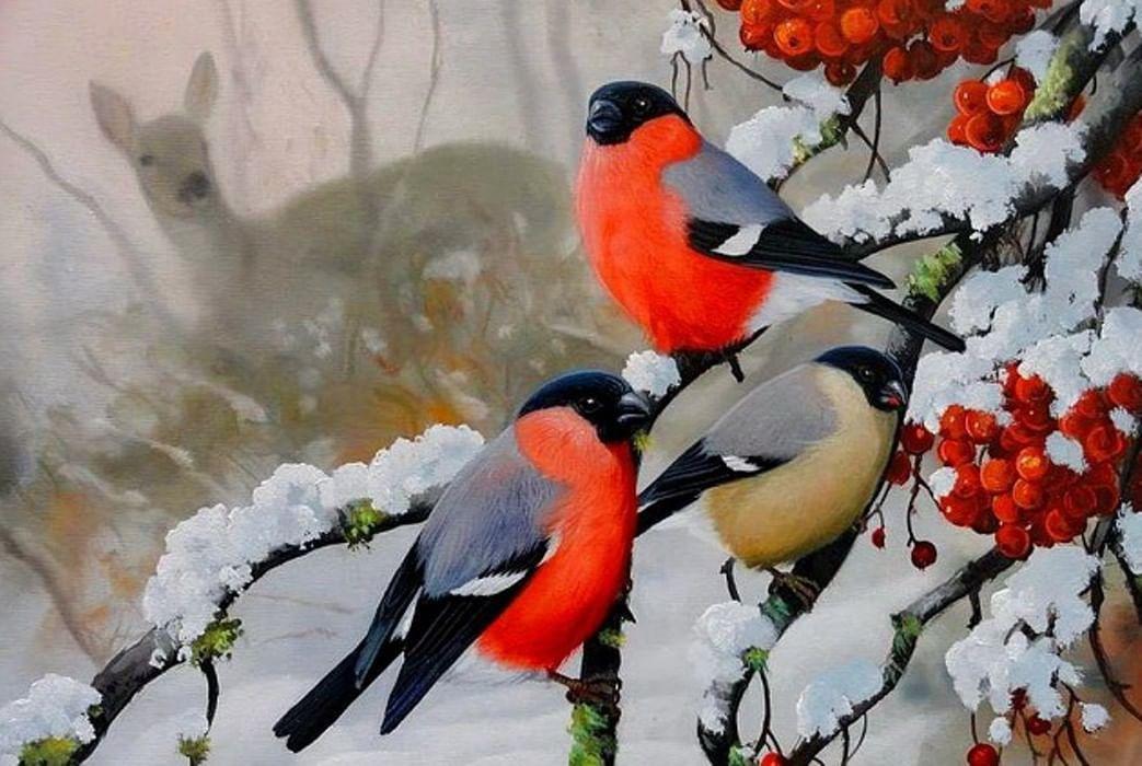 зрителей картинка зимы птиц сила сделала меня