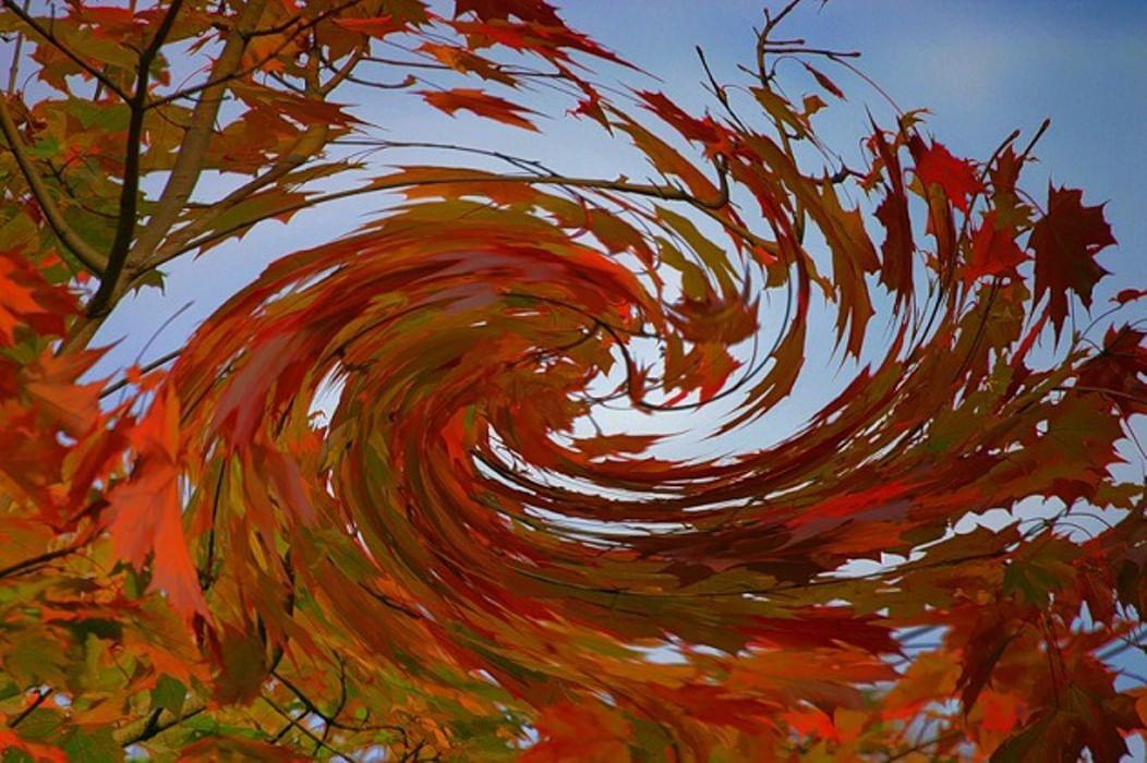картинка листья кружиться отметил