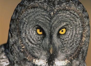Тематическая экскурсия «Кто самый страшный зверь в лесу?»