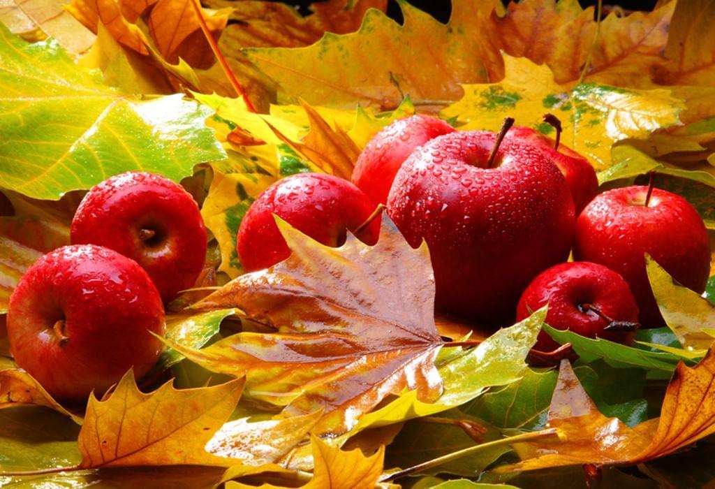 Осеннего настроения картинки, картинки