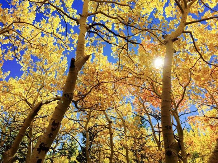 Литературный праздник «Царица-осень»