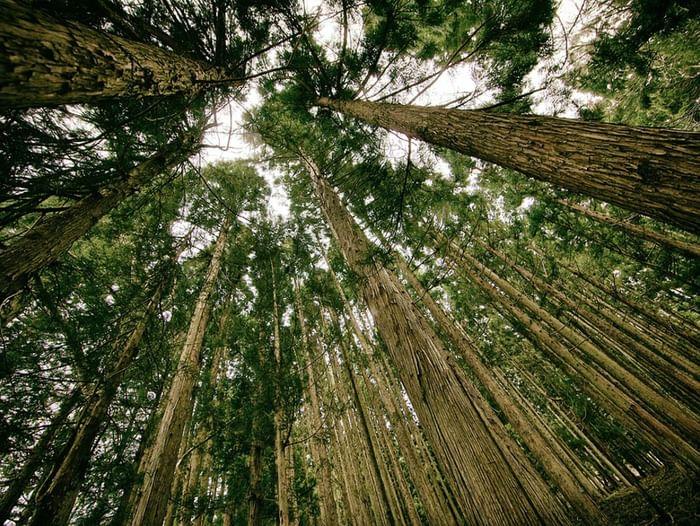 Городской конкурс «Лучший интерактивный плакат экологической тематики»