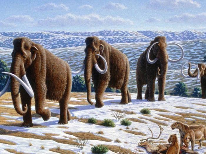 Выставка «Ледниковый период в «Сарепте»