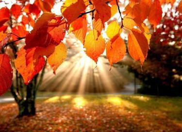 Программа «Осенний вернисаж»