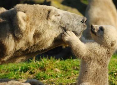 Экологический час «Мамы всякие нужны, мамы всякие важны»