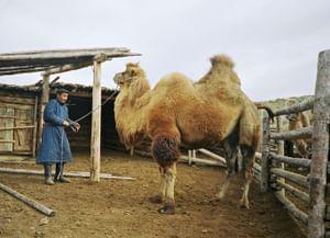 Традиция скотоводческих заклинаний у эрзинских тувинцев