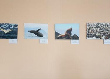 Фотовыставка Евгения Мамаева «Удивительный мир Командор»