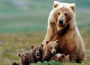 Год экологии: выставки о животных