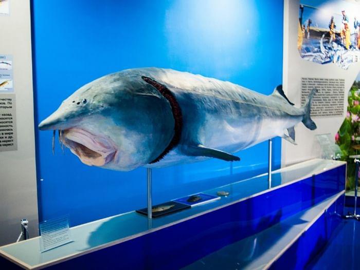 Выставка «Рыбы Волго-Каспийского бассейна»