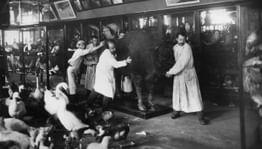 Музейная эвакуация в Великую Отечественную войну