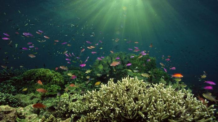 Тайна океанского дна