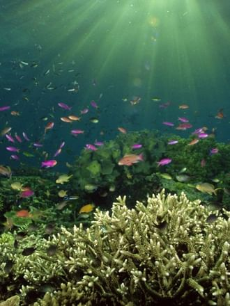 Тайны океанского дна