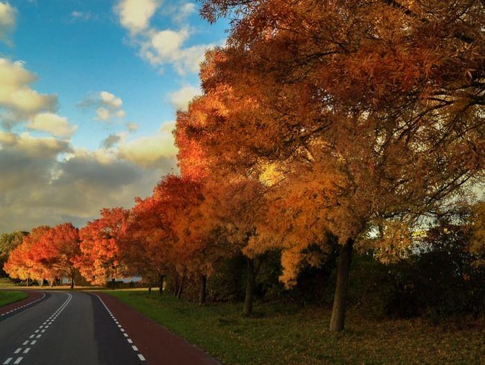 Встреча «Осень-волшебница»