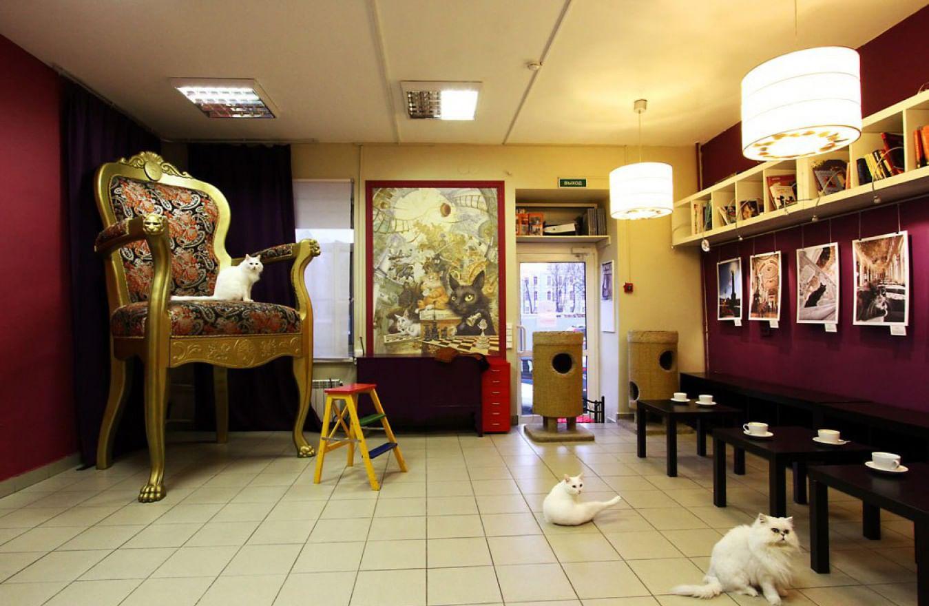 Санкт-Петербургский Музей кошки в городе Всеволожске