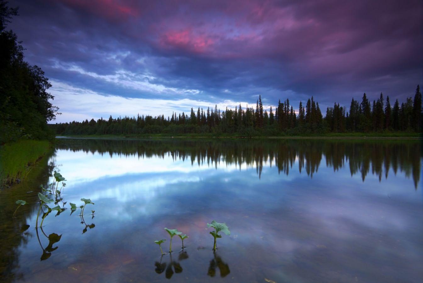 Девственный лес видео фото 779-857