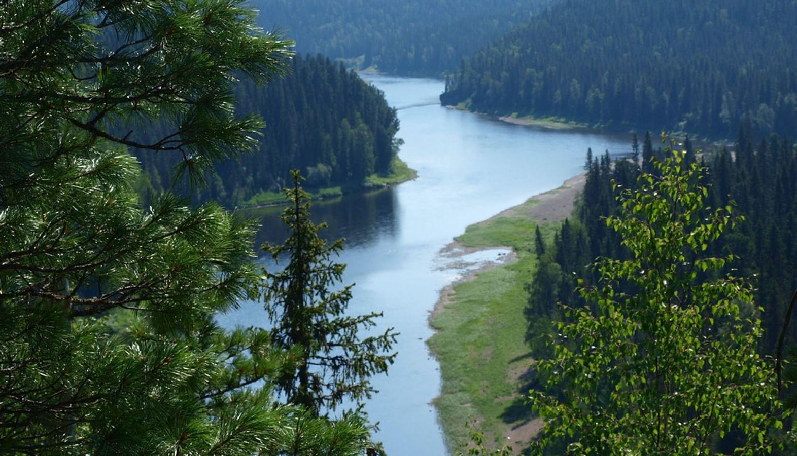 Девственный лес видео фото 779-999