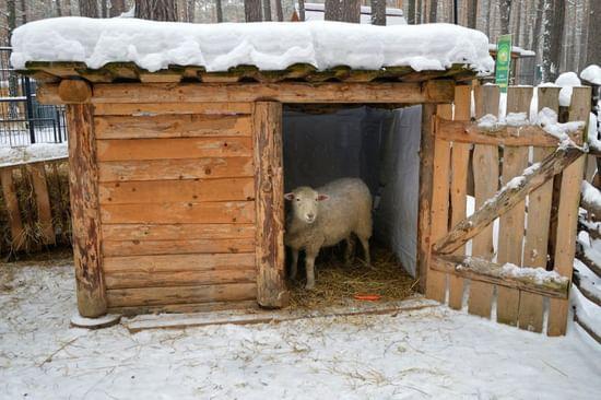 Сарай для овец своими руками с