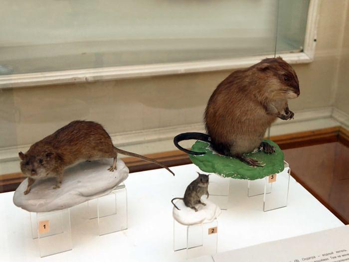 Выставка «Понаехавшие»