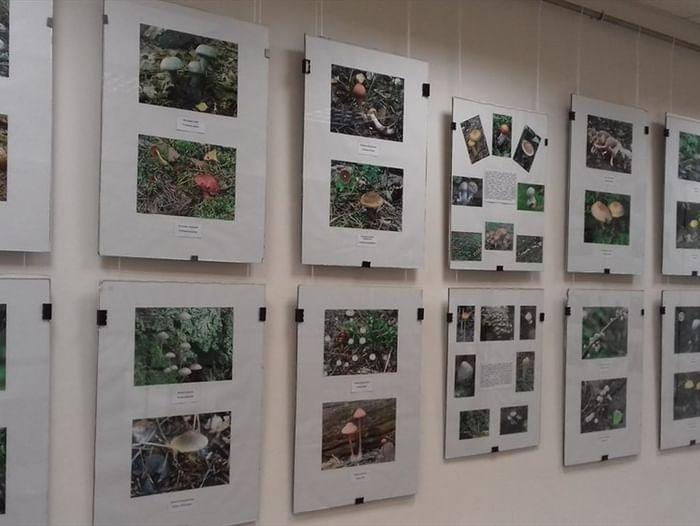 Фотовыставка «Волшебный мир грибов»