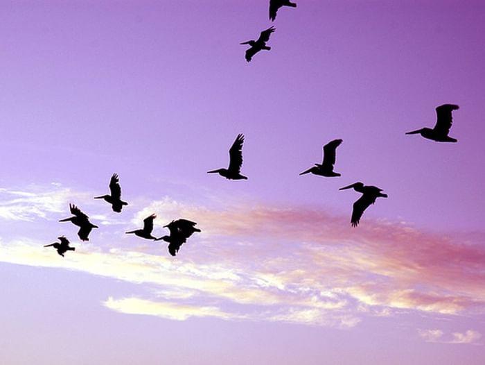 Детская программа «Кто летает и поёт – с нами рядышком живёт»