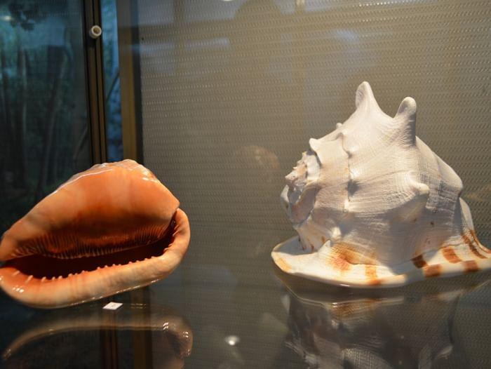 Выставка раковин брюхоногих моллюсков
