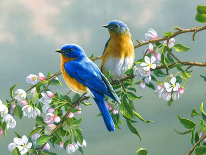 Встреча «Сколько птиц на белом свете?»