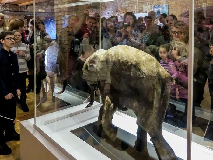 Интерактивная экскурсия по выставке «Находка на краю земли»